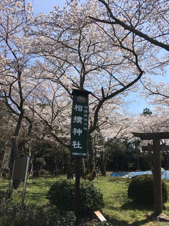 お昼休みにホカ弁買って近くの相撲神社へ来ました。